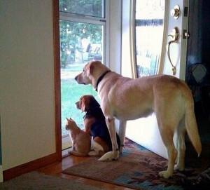 Считается, что животные способны к телепатии