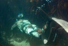В трюмах парохода Карлсруэ может находиться Янтарная комната